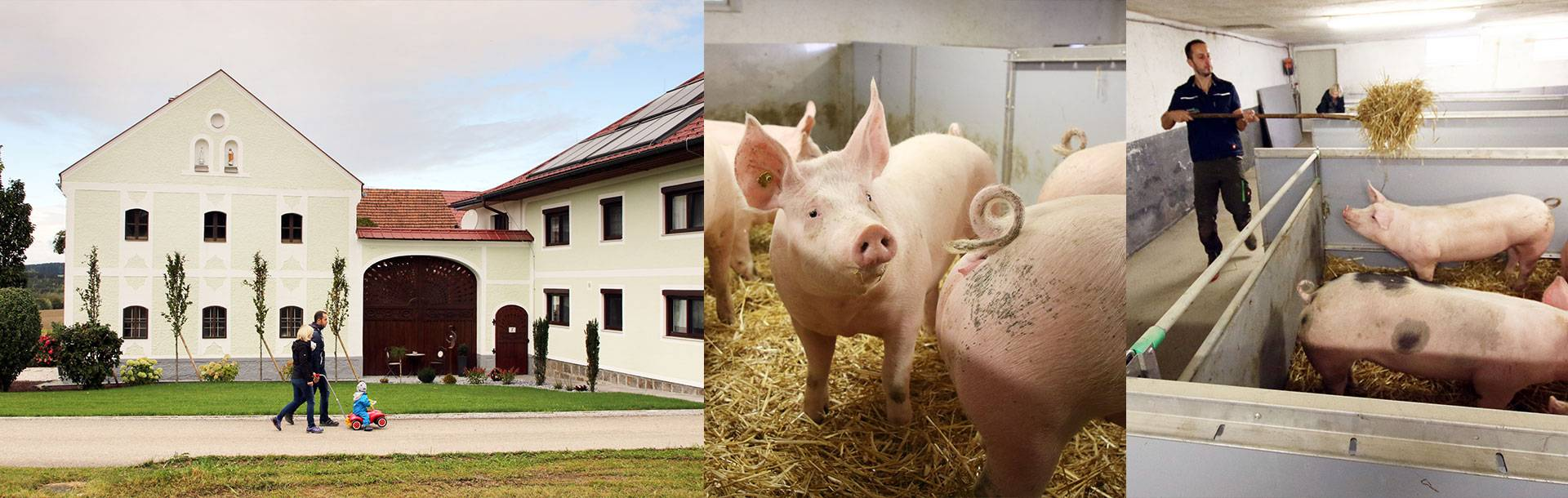 Familie Kumpfmüller haben einen Tierwohl-Stall