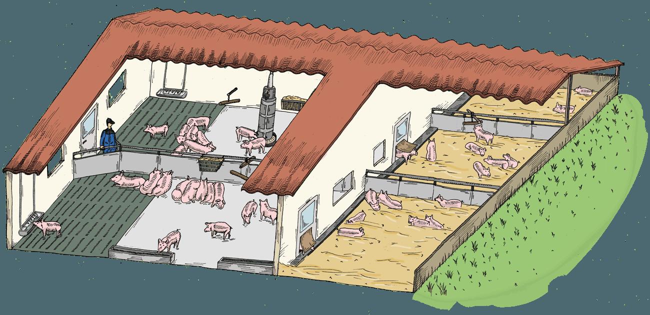 Hofkultur Tierwohl-Stall - Variante Stroh im Außenbereich