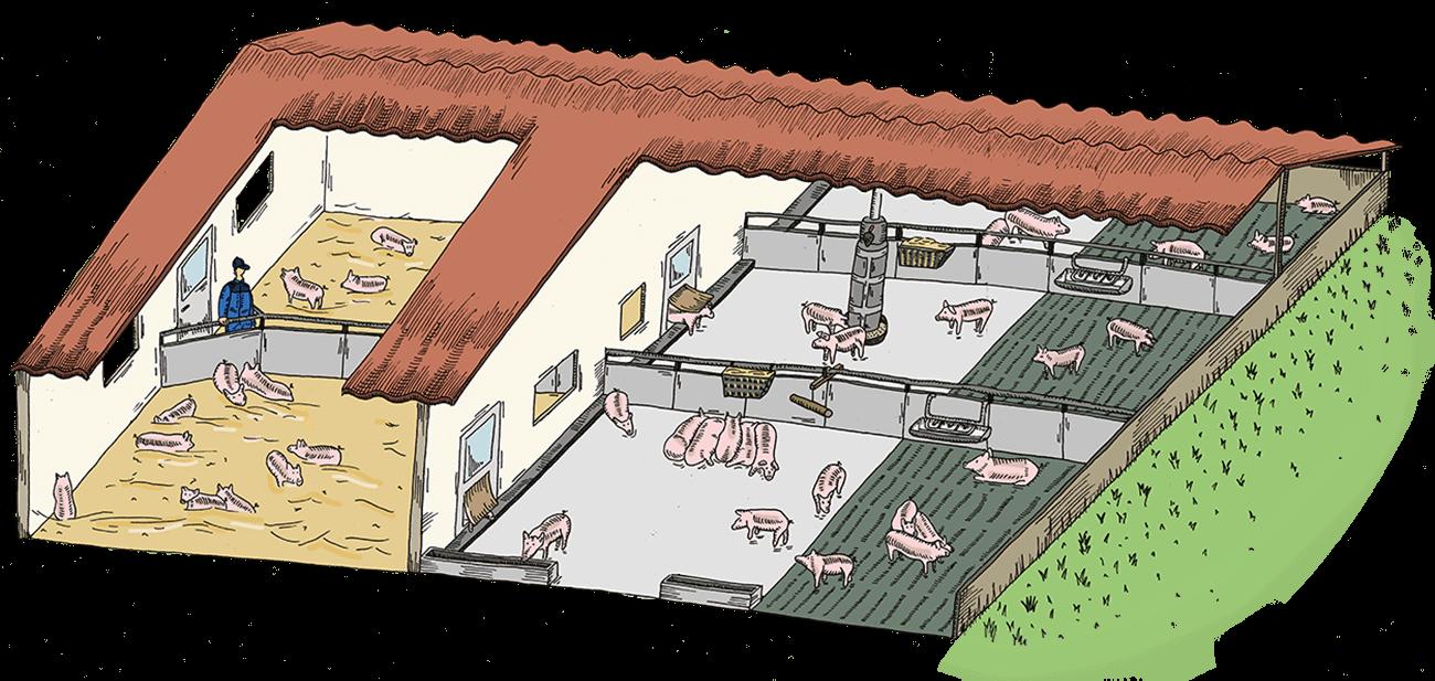 Hofkultur Tierwohl-Stall - Variante Stroh im Innenbereich