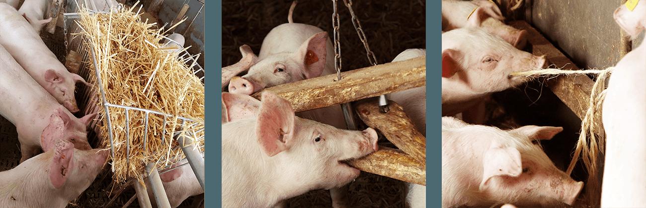 Hofkultur Tierwohl-Stall - Spielzeug & Beschaeftigungsmaterial