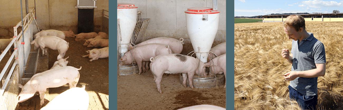 Hofkultur Tierwohl-Stall - Fress Futterbereich